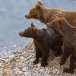 osos-lobos-folgoso--644x362