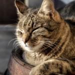 cat-835007_640