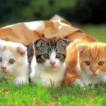 cat_cute_34_1024x768